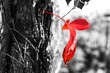 close up image of red autum leaf and tree trunk. selective color