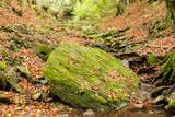 Small stream in autumn beech forest.