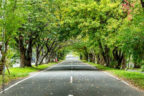 Foto op Canvas Pistache 森のトンネル / 散歩道