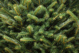Image of Christmas Tree Needles