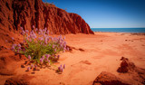 A lonely plant set against the dramatic red pinyin cliffs at James Price Point in the remote Kimberley region of Western Australia. It was the site of a controversial proposed gas plant.