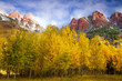 Aspens at Autumn at Maroon Bells in Colorado