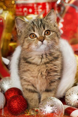 Poster Weihnachtskätzchen