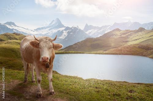 Foto op Plexiglas Bergen Kuh in den Allgäu