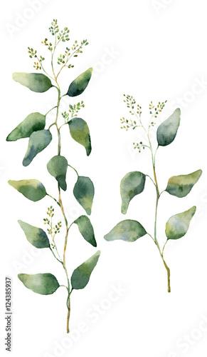 aquarell-eukalyptus-blatter-und-zweige-mit-blumen-handgemalter-bluhender-eukalyptus