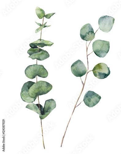 runde-blatter-und-niederlassungen-aquarell-eucalyptus