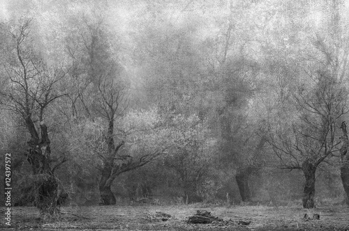 Art grunge landscape showing creepy old forest on cloudy autumn - 124397572