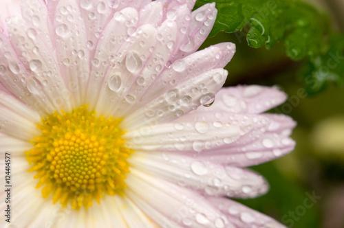 White flower in the garden Poster