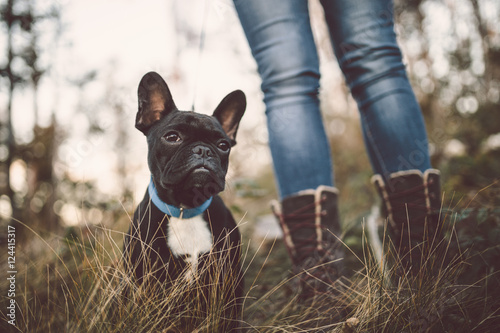 Poster Franse bulldog Adorable French bulldog puppy nature outdoors. Dog sitting in deep forest grass.