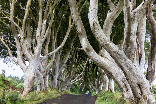 Keuken foto achterwand Noord Europa Magical forest, Northern Ireland