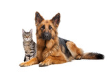 cat and a German Shepherd dog - 124443716