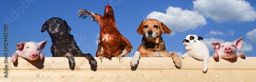 Gruppe von Haustieren schaut über eine Bretterwand, Banner - 124463500