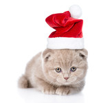 tiny scottish kitten in red santa hat lying in front view. isolated on white