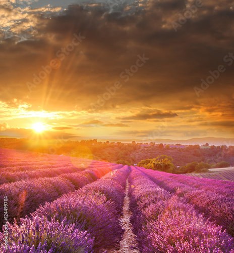 Deurstickers Lavendel Lavender field against colorful sunset in Provence, France
