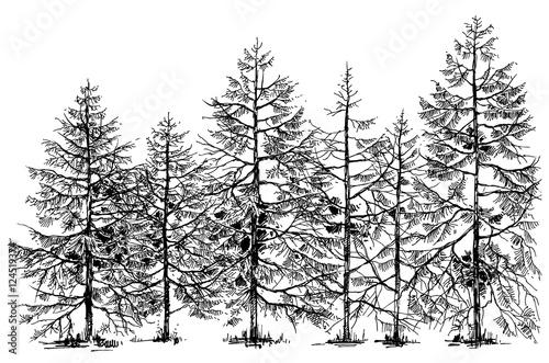 Pine forest hand drawn border - 124519374