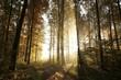 Autumn deciduous forest lit by morning sun