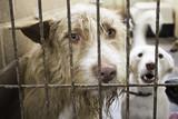 Kennel dogs locked - 124564339