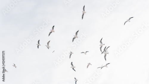 A group of flying seagull birds. Seagulls in the sea. - 124597371