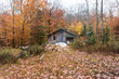 Beautiful Autumn or Fall season colours in an Ontario forest.