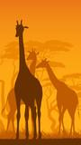 Vertical illustration of wild giraffes in African savanna.