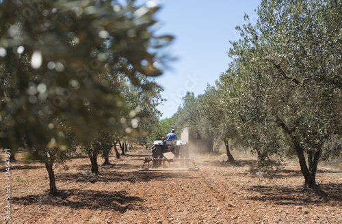 Poster Tractor and olive trees