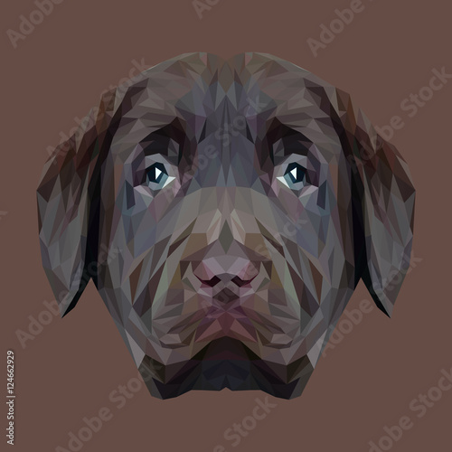 Labrador Retriever Dog puppy animal low poly design. Triangle vector illustration. © shekularaz