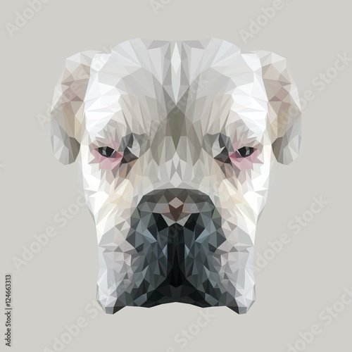 White boxer dog animal low poly design. Triangle vector illustration. © shekularaz