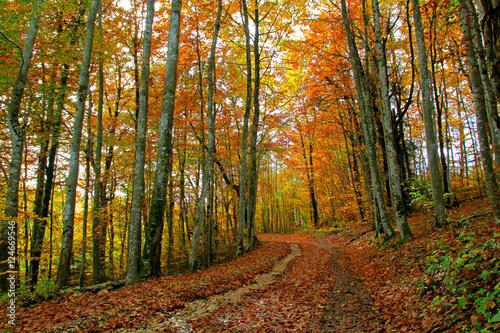 Papiers peints Route dans la forêt Couleurs d'Automne