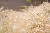Vintage photo of abstract nature background with wild flowers and plants dandelions in sunlight