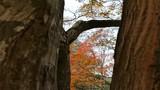 秋の紅葉と野生のリス_1