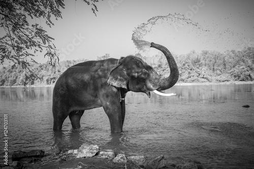 slon-w-kapieliskach-kerala-indie