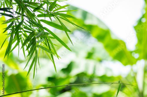 Bamboo green leaf blurred background © mumemories