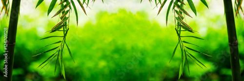Bamboo green leaf soft blurred background