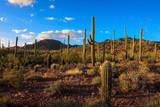 Saguaro National Park - 124796522