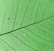 Green Leaf arrière-plan