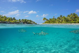 Half above and half below view of a tropical island with a vacations resort and blacktip reef sharks underwater, Tikehau atoll, Pacific ocean, French Polynesia  - 124907380