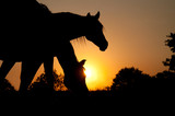 Two horses silhouetted against rising sun