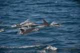 Dolphins who had their fun racing and crisscrossing in front of the raft. Sometimes they were just inches away.