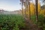 Młodnik w lesie sosnowym - 124924927
