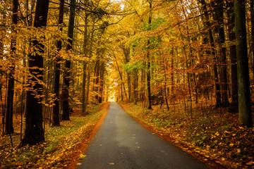 Autumn forest in Czech Republic