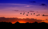 Silhouette of flying birds over red sunset - 124936987