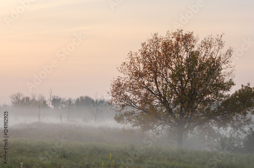 Autumn fog, sunrise in the forest © na9179126124