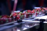 Strawberries  on conveyor belt on packing line - 124997572