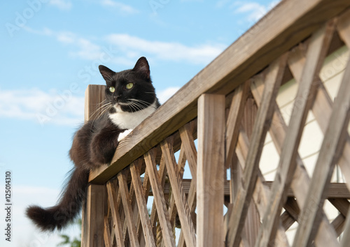 Poster Black and white cat resting on top of wooden railing