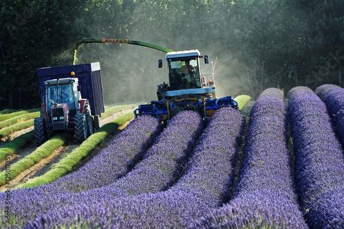 Tuinposter Lavendel Récolte de lavandes