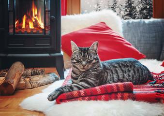 cat relaxing beside fireplace