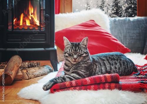 cat relaxing beside fireplace - 125145513