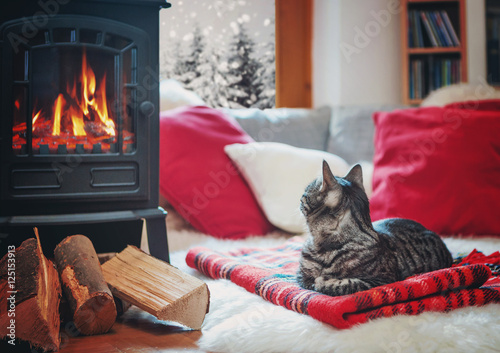 Poster cat relaxing beside fireplace watching snowflakes outside the wi