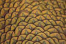 Belles plumes de paon, plumes de paon vert d'oiseaux dans les proches des détails