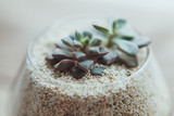 Decorative glass vase with white sand and succulents